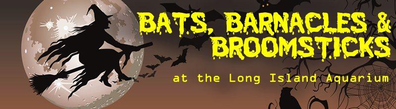 Bats Barnacles Broomsticks Halloween Party Long